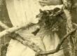 Betti Alver u. 1930 - KM EKLA