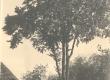 Taluaia vaade, Puu all K. E. Sööt - KM EKLA