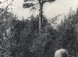 Kurvitsa talu pedajas 1937. a. (K. E. Sööt'iga esiplaanil?) - KM EKLA