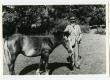 Ants Laikmaa vanema mehena hobusega koplis Taeblas - KM EKLA