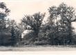 Iidsed tammed Jaan oksa koduväravas - Orissaare rajoonis Ratla külas Allika koolikohal - KM EKLA