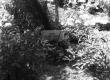 Aliide Ertel'i (1877-1955) haud Puka kalmistul 1970. a. - KM EKLA