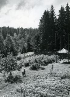 Valgemetsa, Kongusi 1956. a juulis